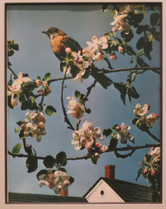 Paul Outerbridge, First Robin of Spring, Carbo print, 14 3/8 x 10 5/8 inches, 1938, printed c. 1938.